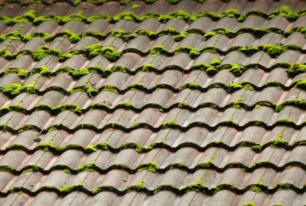 Moss Growth on Domestic Roof